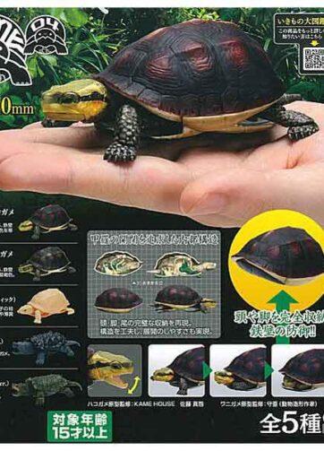 Box Turtl