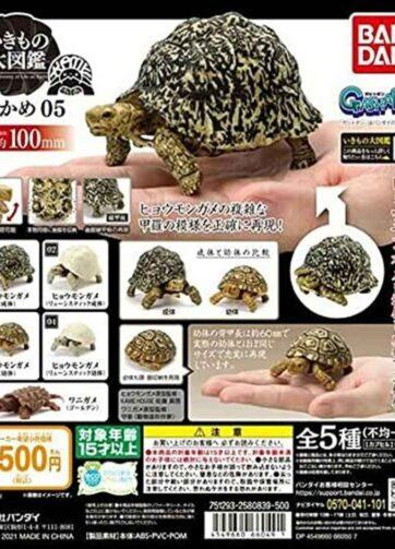 Ikimono Encyclopedia Kame (Turtle)